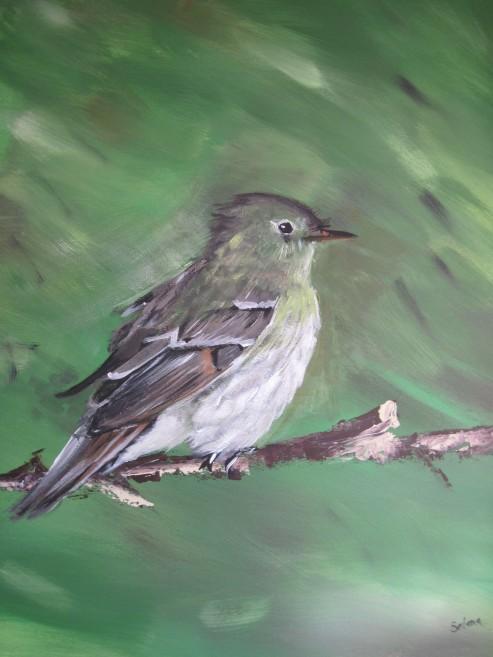 Acadian flycatcher_edited-1
