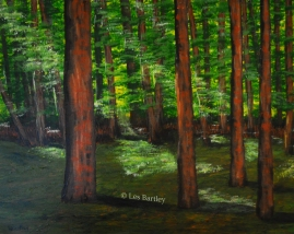 Pine Woods - by Les Bartley